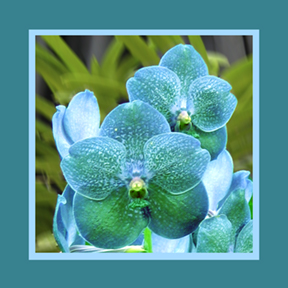 Blue Orchid square for repeat and custom designs by Debra Cortese