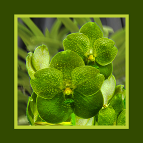 Green Orchid square for repeat and custom designs by Debra Cortese
