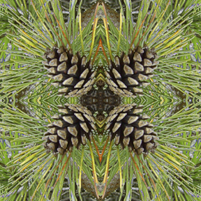 Nantucket Pine Cones square for repeat patterns by Debra Cortese