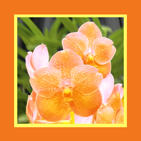 Yellow Orchid square for repeat and custom designs by Debra Cortese