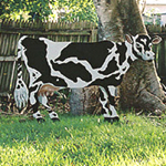 Cow, 6'x 4', black and white, holstein, acrylic on plywood custom painting by Debra Cortese