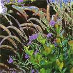 Cat tails and cocoplum Nature's Energy image by Debra Cortese. purples, violets, golden orange, yellows, greens and dark, rich background