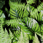 tropical leaves and ferns, vibrant greens against rich, dark background, golden highlights
