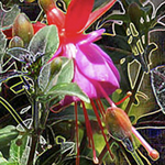 Dramatic Fuschia bloom, blue reds, warm pinks, greens, yellows, Nature's Energy image by Debra Cortese