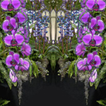 Cascading Orchid Reflections. Nature'e Energy Reflections series by Debra Cortese