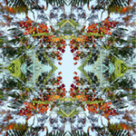 Royal Poinciana Reflections2. Nature'e Energy Reflections series by Debra Cortese
