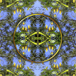 Butterfly Garden. Nature'e Energy Reflections series by Debra Cortese
