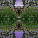 Cocoplum and Cat Tails NER. Nature'e Energy Reflections series by Debra Cortese