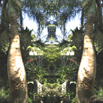 Monteray Palms. Jame's Garden Coral Gables, FL. Nature'e Energy Reflections series by Debra Cortese
