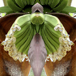 Banana Tree. Nature'e Energy Reflections series by Debra Cortese