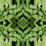 Tropical Ferns and Leaves diamond reflection. Nature'e Energy Reflections series by Debra Cortese