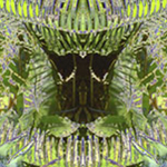 Tropical Rainforest Reflection for patterns, custom designs by Debra Cortese