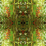 Heliconia Drapes NER3. Nature'e Energy Reflections series by Debra Cortese