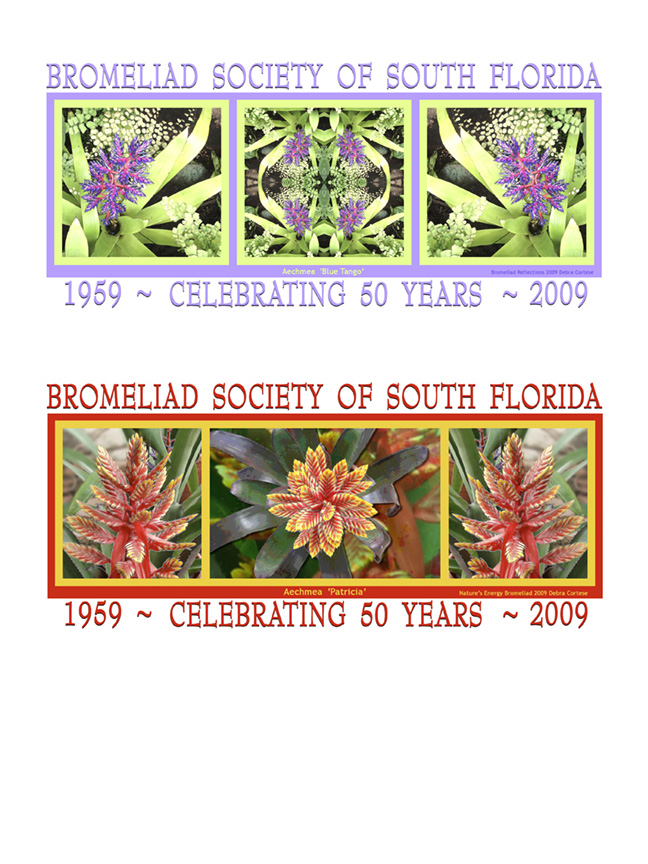 click image to see more Bromeliad art on products
