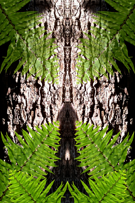 click here for larger image of Debra Cortese's TOTEM Ferns and Avocado Bark art