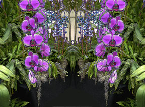 Fuschia Orchid Cascade Nature's Energy Reflections