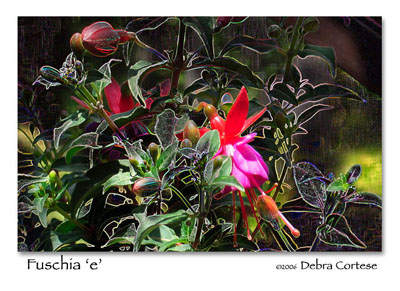 Fuschia, a Nature's Energy Photopainting by Debra Cortese