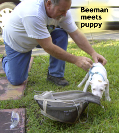 Beeman and Puppy playing