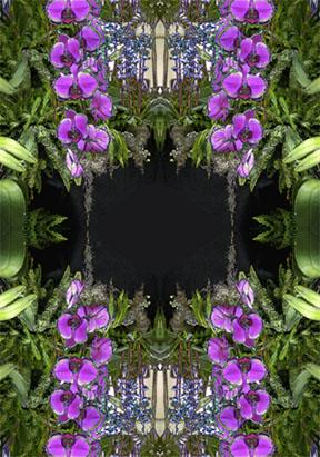 Fuschia Orchid Cascade Reflections
