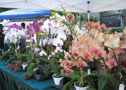 Green Market Estela's Orchids photo: Debra Cortese