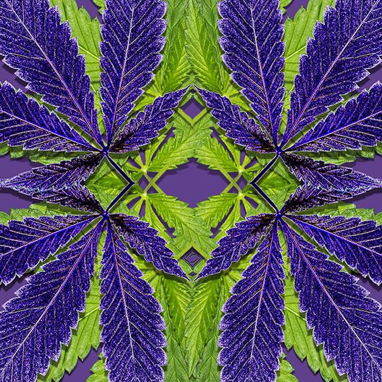 Cannabis Leaves pattern in Pantone Ultraviolet and leaf greens - Debra Cortese Designs