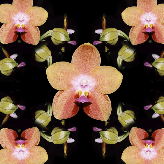 Magenta Peach Orchids pattern by Debra Cortese Designs